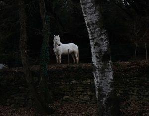 grignan_cheval_blanc